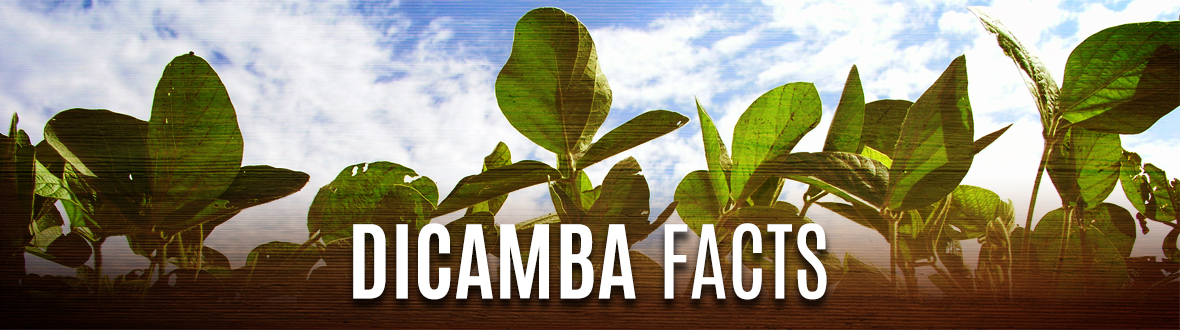 Dicamba Facts